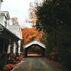"""lilacremes: """"if you look closely, you can see falling leaves dancing in the distance 🍂🍂👀 ™ """" Autumn Cozy, Autumn Aesthetic, Best Seasons, Covered Bridges, Autumn Inspiration, Fall Halloween, Halloween Scene, Halloween Season, Happy Halloween"""