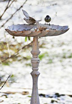 Love this bird bath!
