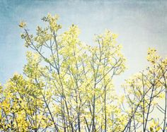 Nature Photography  Crisp Yellow Tree - Fall Colors, Leaves, Nature, Golden, Blue Sky, Dreamy Wall Decor - Whispers