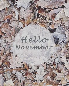 Hello November #meraki_interiors