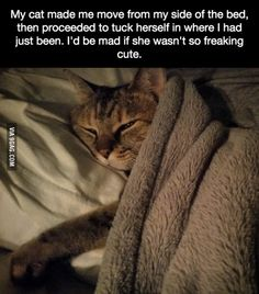 My cat made me move from my side of the bed then proceeded to tuck herself in where I had just been. Id be mad if she wasnt so freaking cute. Cute Funny Animals, Funny Animal Pictures, Cute Cats, Funny Cats, Pretty Cats, Beautiful Cats, Animals Beautiful, Crazy Cat Lady, Crazy Cats