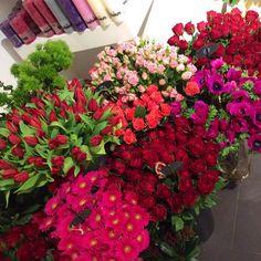 Kwiaty Bloomi