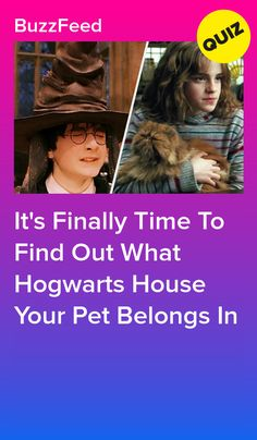 We Know What Hogwarts House Your Pet Truly Belongs In And Yes You Read That Correctly Your Pet Hogwarts Pets