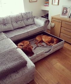 Dog beds can be simple or fancy, expensive or homemade, and everything in between. How do you pick the right dog bed for your pup when there are so many on the market? Does your pooch even need a dog bed? Here's a guide to answer your questions! Dog Rooms, Dog Houses, Dream Houses, My New Room, My Dream Home, Interior Design Living Room, Interior Livingroom, Home Goods, Bedroom Decor