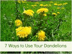 7 Ways to Use Dandelions    Dandelion helps/has been used to:    -Purify blood  -Treat cancer  -Cleanse & detoxify the liver  -Treat skin conditions such as acne  -Natural diuretic  -Improve digestion  -Reduce oxidative stress