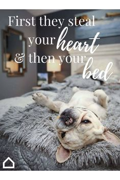 Once you get a puppy, your bed belongs to them. Make sure its cozy! Animals And Pets, Baby Animals, Funny Animals, Cute Animals, Cute Puppies, Cute Dogs, Dogs And Puppies, Dog Quotes, Animal Quotes