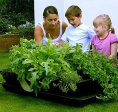 Grow Your Own Vegetables Made Easy.