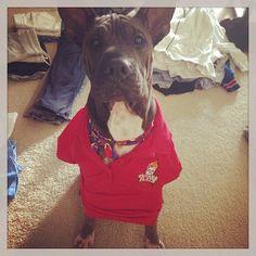 Maybe no one will even notice I'm not really human... [Photo Credit: @ashtonfacenig via Instagram] #dog #TijuanaFlats #Flathead #pets