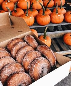 apple cider donuts a fall must! Fall Halloween, Happy Halloween, Halloween Movie Night, Halloween Donuts, Halloween Rocks, Halloween Costumes, Autumn Cozy, Autumn Fall, Happy Fall Y'all