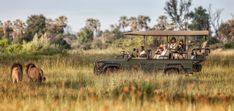 Chitabe Lediba vehicles with territorial male lions on patrol