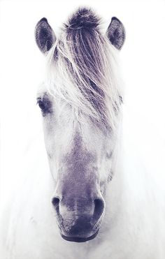 i love this picture, i want a profile like this done of my horse