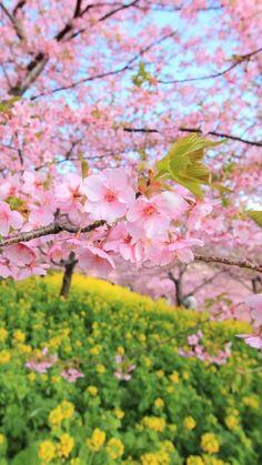 Spring, bloom, trees