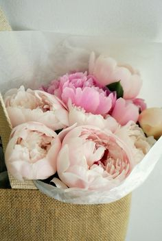my favorite flower. Peonies have officially trumped tulips!