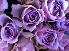Purple Roses - I remember buying my mom a miniature purple rosebush at a greenhouse once that she just loved.  It was such a pretty color. After she died, I was so happy when I found it coming up in her yard in the Spring because somehow it had been cut down & mowed over so I wasn't able to find it & suddenly one day, there was a little purple bud peeking out, sort of like a sign.  :-)
