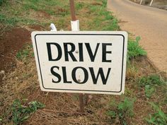 What to do About Animals in the Path of Your Jeep - Drive slow