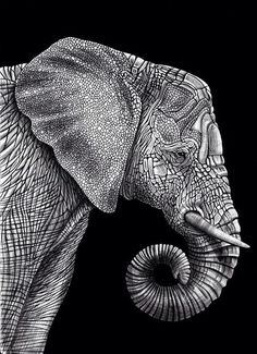 Elephant drawings | Black and white elephant
