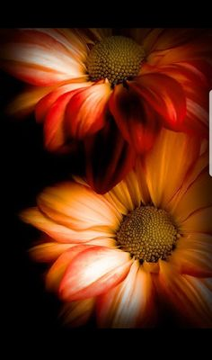 Perk Up Your Garden With These Handy Tips. It does not matter if you grow vegetables or flowers in your garden, growing and caring for the Exotic Flowers, Amazing Flowers, Beautiful Flowers, Flower Phone Wallpaper, Wallpaper Backgrounds, Foto Art, Beautiful Gardens, Flower Art, Nature Photography