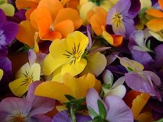 Violas and pansies are some if my favorites. Edible Flowers, All Flowers, Types Of Flowers, Colorful Flowers, Spring Flowers, Beautiful Flowers, Happy Flowers, Wedding Flower Decorations, Flower Centerpieces