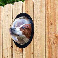 Cracking up at this dog peek window