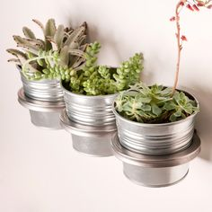 I've always wanted to have wall-mounted plants. This would also be perfect for organizing anything.