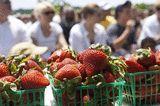 Delaplane Strawberry Festival 2014 - Sky Meadows State Park