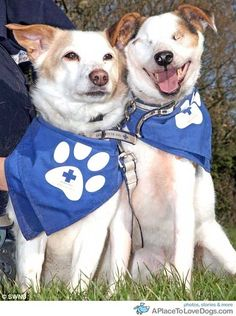 The blind dog who needs a new home...and he comes with his own guide dog.  www.dailymail.co....