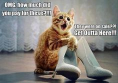 Weird cats and kittens, cat humour. For the funniest cats and kittens images as well as quotes go to www. Funny Animal Memes, Animal Quotes, Funny Animal Pictures, Cat Memes, Funny Images, Funny Animals, Cute Animals, Hilarious Pictures, Animals Images