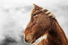 made me think of you, Bianchi.thought you'd like it. Icelandic Horse, All The Pretty Horses, Like Animals, Equestrian, Pony, Thunder, Gallery, Awesome, Cute