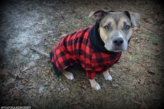 Red buffalo plaid sweater for large dog by Tooth & Honey