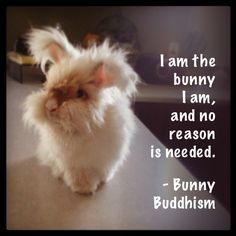 I am the bunny I am, and no reason is needed. - Bunny Buddhism