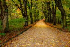 A play on the yellow-brick road theme.  Look at how the leaves decorate the journey