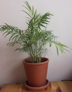 """5 """"difficult to kill"""" indoor plants"""