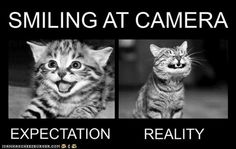 Funny pictures jokes videos and fb sayings Katzen I Love Cats, Crazy Cats, Funny Animal Pictures, Funny Animals, Epic Pictures, Random Pictures, Animal Pics, Les Bee Gees, Expectation Reality