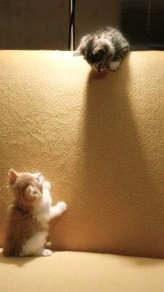 Cute cats !