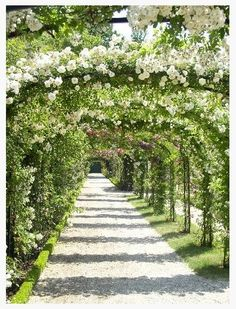 Beautiful arbor