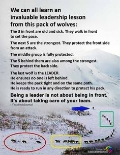 We Can All Learn An Invaluable Leadership Lesson From This Pack Of Wolves The Minds Journal Leadership Abilities, Leadership Lessons, Leadership Roles, Leadership Development, Self Development, Educational Leadership, Strategic Leadership, Student Leadership, Leadership Coaching