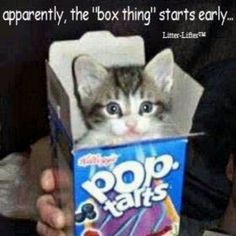 'Pop-up Kitty'