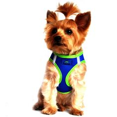 Small Dog Harness | American River Dog Harness - Top Stitch Collection
