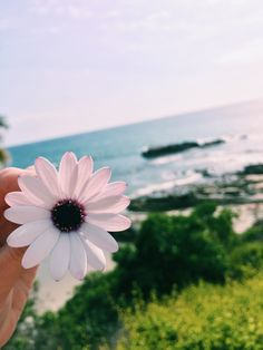 such a pretty flower and such a pretty view
