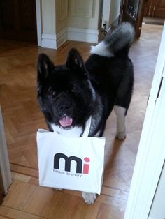 This is Makita, he's mascot for Mi Fitness Directory! Lovely!  #LIW2013