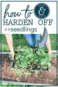 Gardening Hacks, Organic Gardening Tips, Hardening Off Seedlings, Cold Frame, Seed Starting, Raised Garden Beds, Amazing Gardens, Vegetable Garden, Homesteading