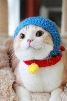 Doraemon:) - Doraemon, an intelligent robotic cat, is the leading character of a famous Japanese comic for children.