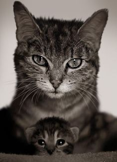 family portrait - marjorie mcdonough - Google+