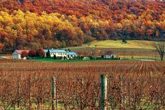 Known as DC's wine country for its proximity to the heart of Washington, DC (just 25 miles), Virginia's Loudoun County provides a breath of fresh air and so much to discover. The rolling hills of Loudoun County are a treasure trove for visitors looking for something to do. #Wine #WineTasting #Loudoun