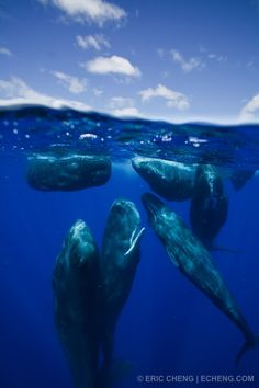 Sperm whales in Dominica, Day 2 | Eric Cheng's Journal