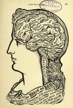 20 best phrenology images phrenology head, anatomy, brainmap your murderousness with these 19th century brain charts