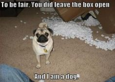 Funny pugs image by Suzanne_DeJong on Photobucket Dog Quotes Funny, Funny Dogs, Cute Dogs, Funny Memes, Humour Quotes, Hilarious Sayings, Funniest Quotes, Funny Puppies, Quotes Pics