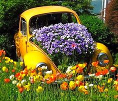 Yellow VW car used as a planter.  See more car planters - http://thegardeningcook.com/car-planters/