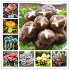 Bonsai  200pcs/bag Mushroom Seeds Funny Succlent Plant Edible Health Vegetable 25 Kinds Mushroom Seeds For Happy Farm Free Shipping *** Click the VISIT button to find out more