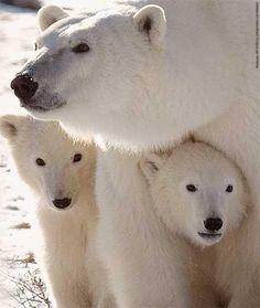 La mejor protección, estar con mamá.